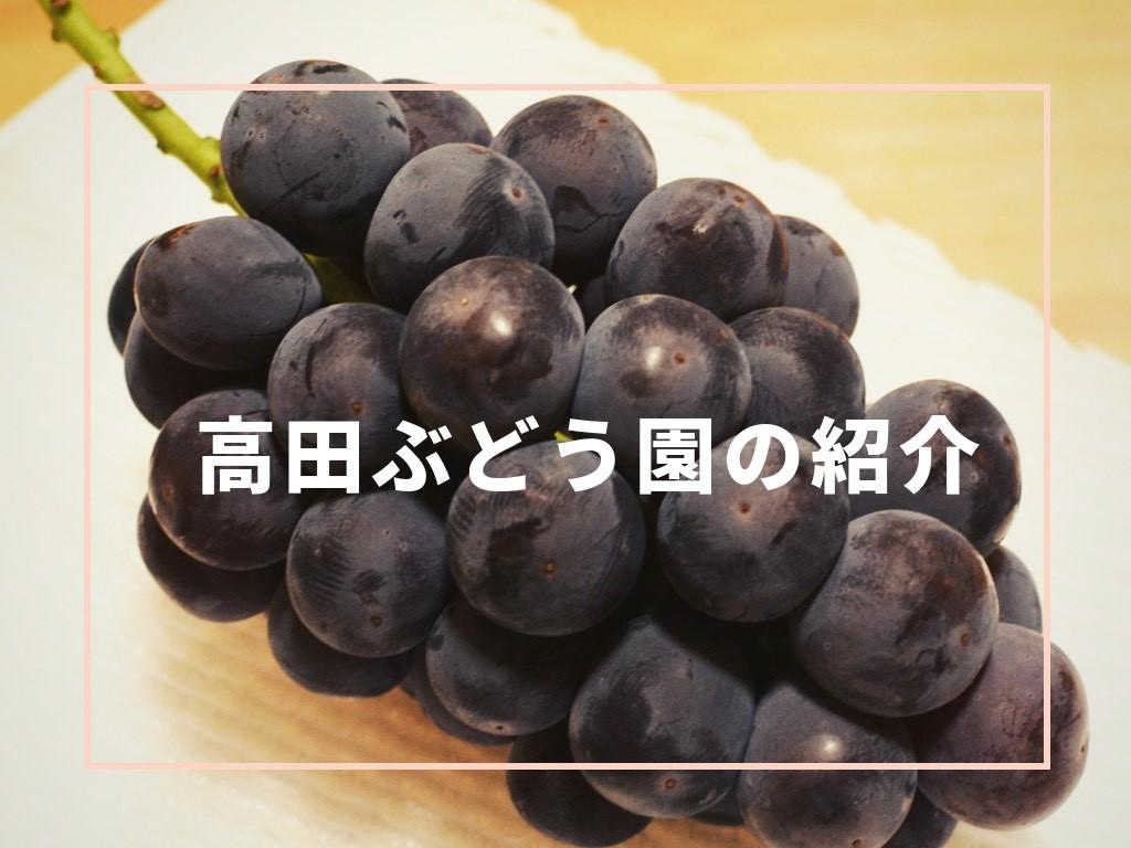 高田ぶどう園の紹介